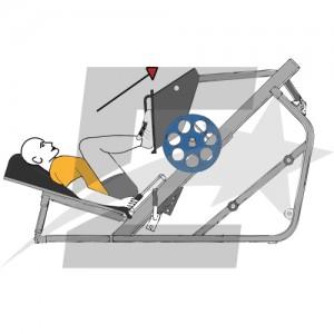 Rutina de musculaci n para principantes semanas 1 3 for Maquinas de musculacion